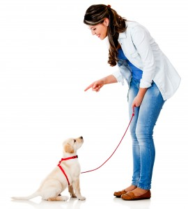 Trainer Training A Dog To Sit
