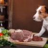 Dog Eating Vitamins