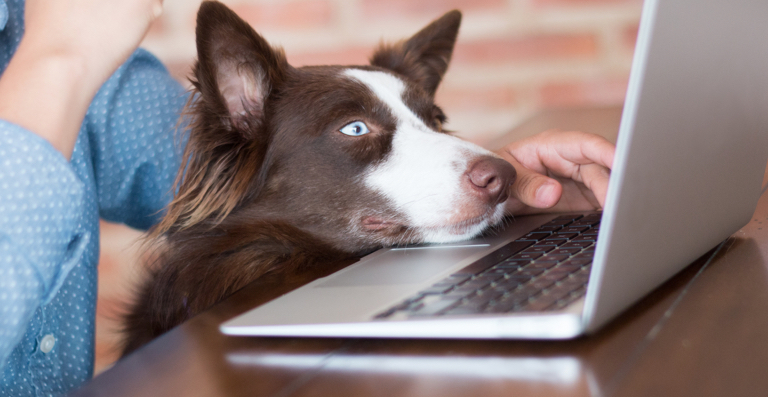 How To Keep A Dog While Working Full Time – 5 Golden Tips