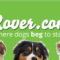 Rover.com Header Banner