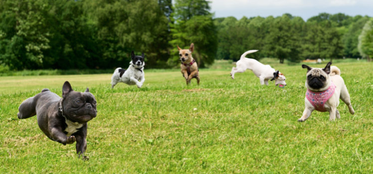 6 Best Dog Parks In The Country