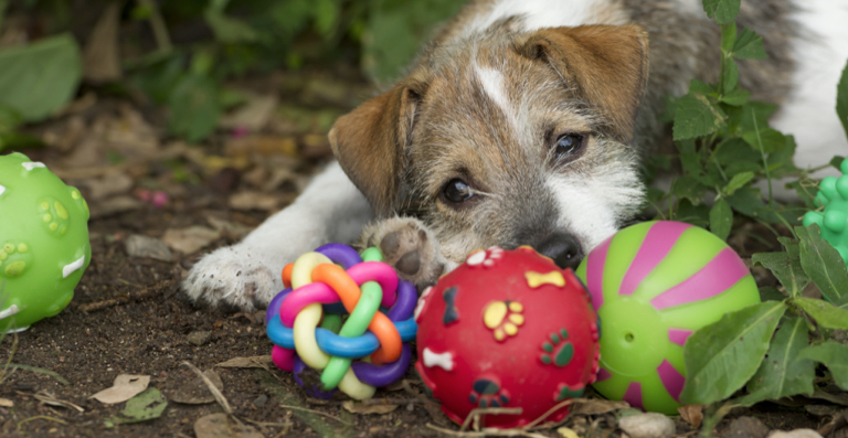 Best Toys To Keep Dog Busy