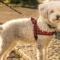 dog-in-harness-min