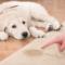 Dog Peed On Carpet