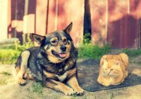 Why Dogs and Cats Need Extra Care During Summer