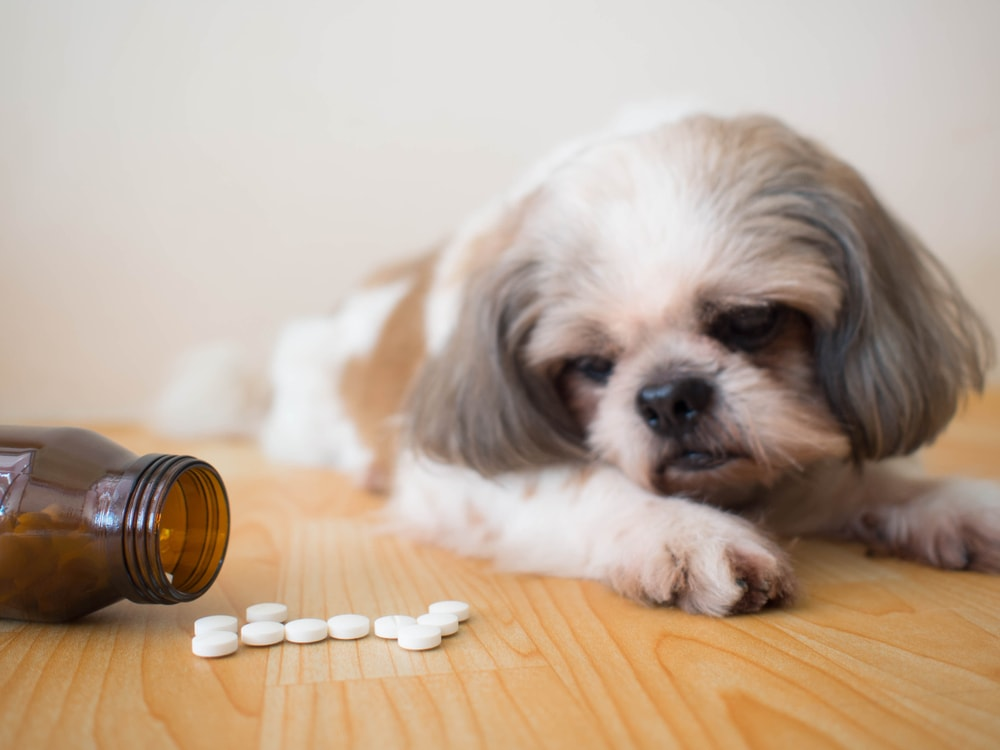 Dog Refusing to take supplements