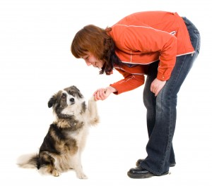 Dog Trainer Rochester New York