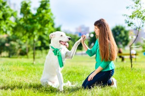 Rochester Dog Training Prices