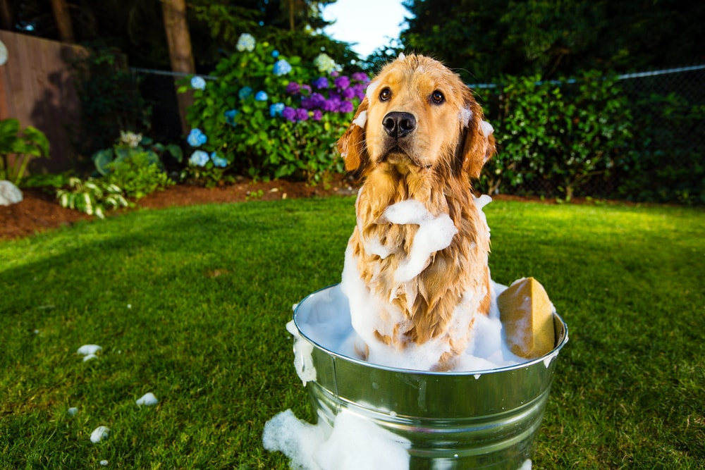 How to Keep Your Dog Clean