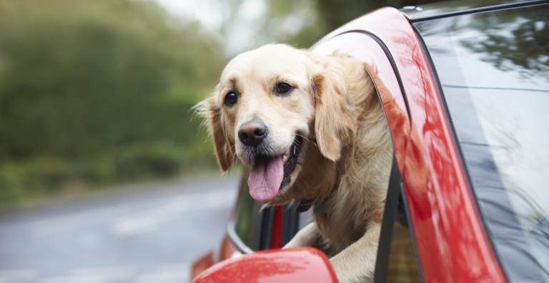 How To Train Your Dog For Road Trips