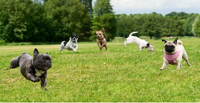 6 Best Dog Parks In The USA