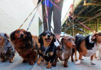 6 Overlooked Tips To Becoming A Dog Walker