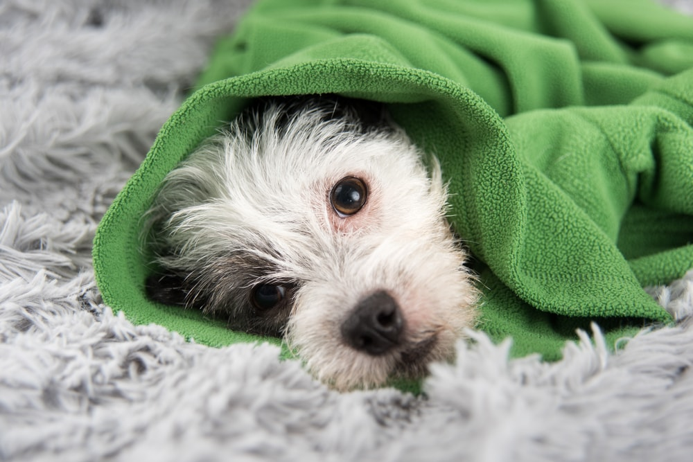 Top Signs of Sick Dogs