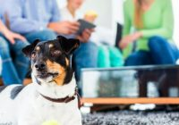 Common House Dog Complaints And How to Deal with Them