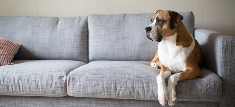 What to Look For When Buying Dog-Friendly Furniture