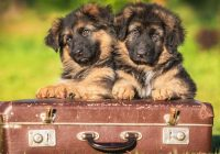 10 Tips to Consider Before Pet Boarding Your Dog