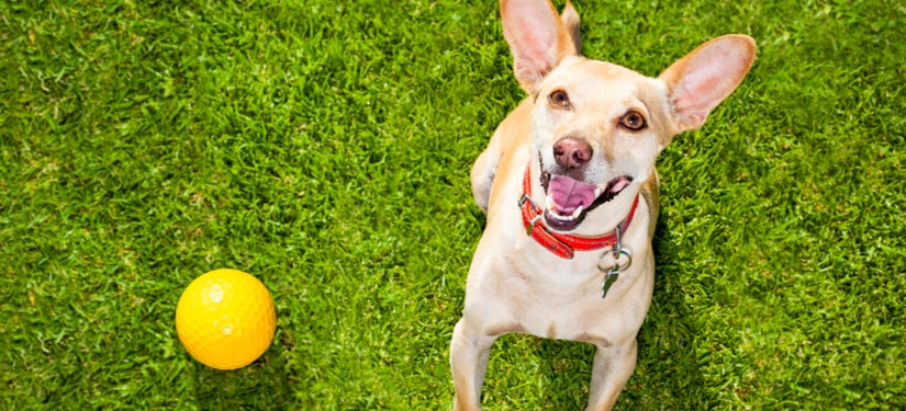 5 Helpful Tips in Teaching Fetch to your Dog