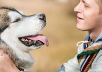 How Can Emotional Support Animals Help Boost Your Mood?