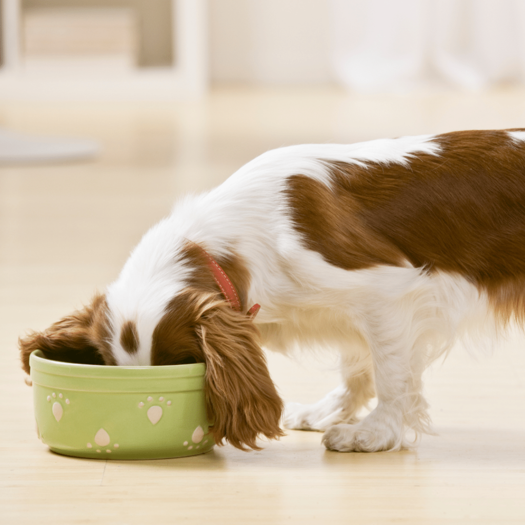 how to give your dog Metamucil