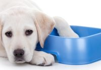 Wet Food vs. Dry Food: What to Feed What Breed