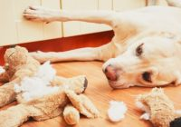 What to Consider When Buying Dog Toys