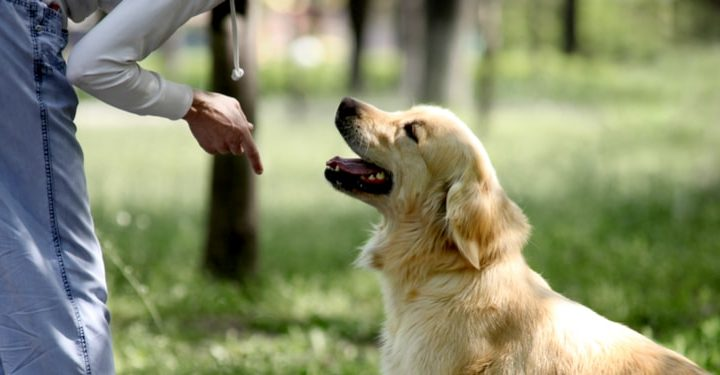 The Best Time & Age to Train your Dog