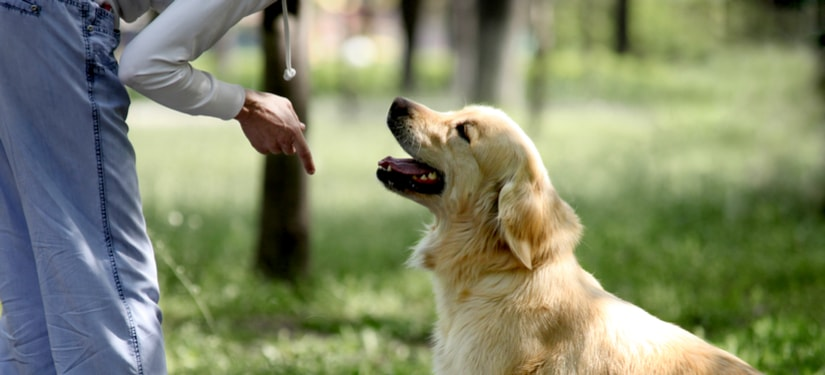 The Best Time & Age to Trainyour Dog