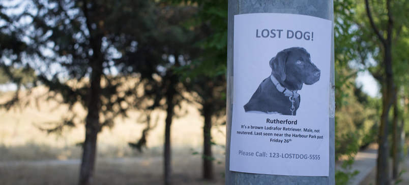 10 Things You Should Do If Your Pet Goes Missing