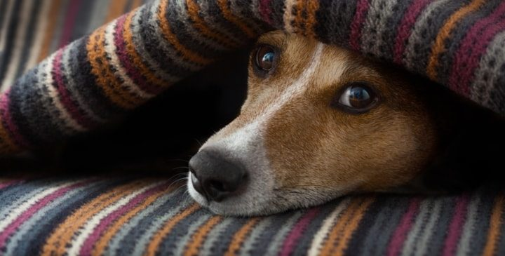 How to Tell if Your Dog is in Pain or Sick