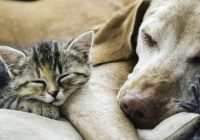 Puppy PurrPals: 10 Cat-Friendly Dog Breeds