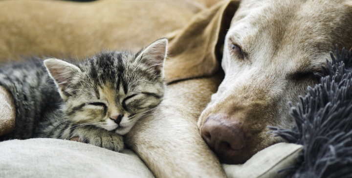 Puppy PurrPals: 10 Cat-Friendly Dog Breeds