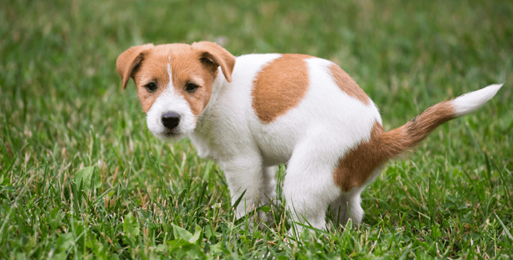 You Discovered Worms in Your Dog's Poop – Now What?