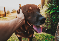9 Tips for Bonding with your Rescue Dog
