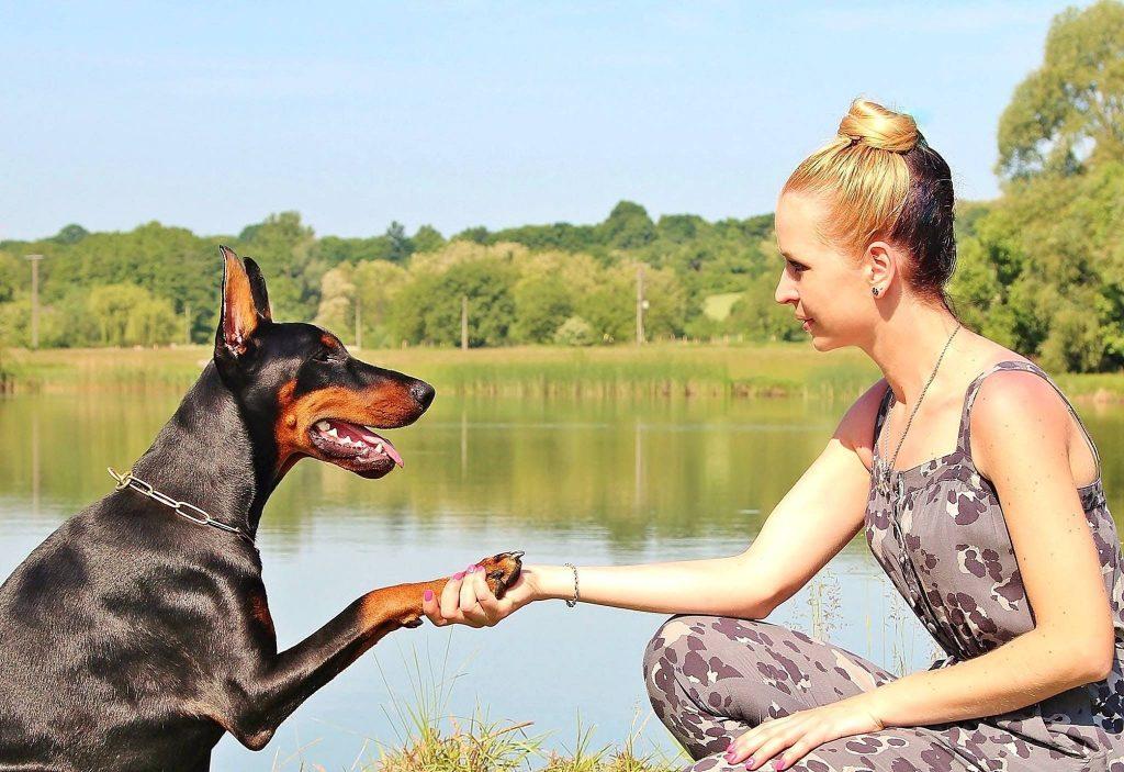 Dog training and Praise