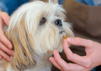 Does My Dog Need a Probiotic?