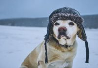 15 Ways to Protect Your Dog When It's Cold Outside