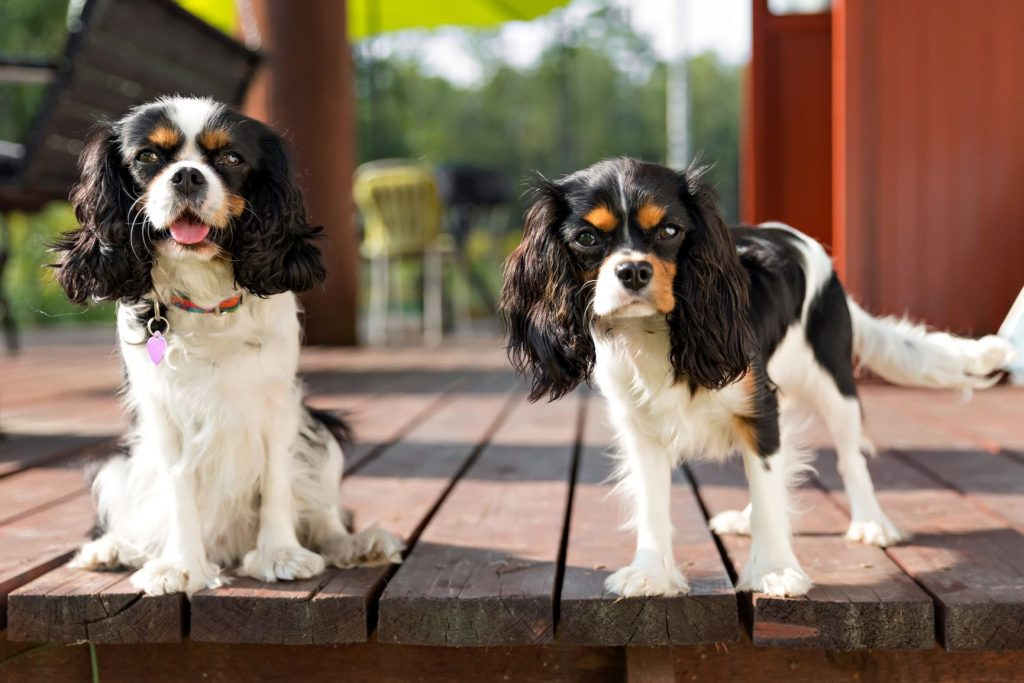Overnight Care Options for Dogs