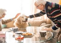 Dog Etiquette: Your Dog as a Houseguest