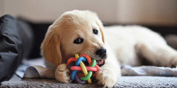 Use chew toys and treat puzzles to keep your puppy occupied while he gets used to his crate.