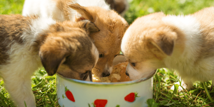 Best Puppy Food Recommended By Vets