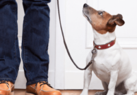 5 Useful Commands for Dogs On-The-Go