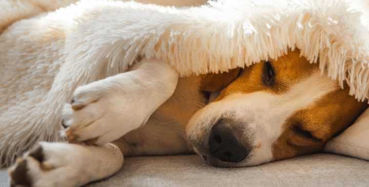 How Do You Cheer Up a Dog Who's Depressed?