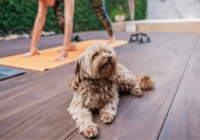 10 Fun Ways to Exercise with Your Dog