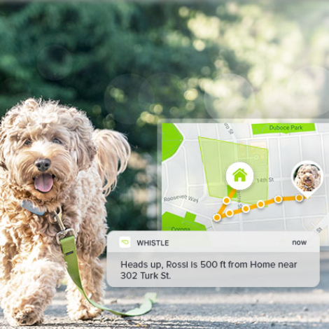 How the Whistle GPS Pet Tracker Works