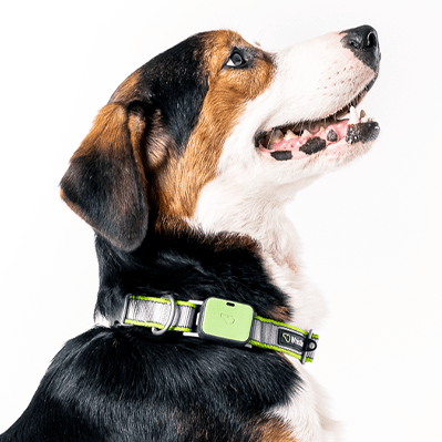 Key Features of the Whistle Pet Tracker Unit