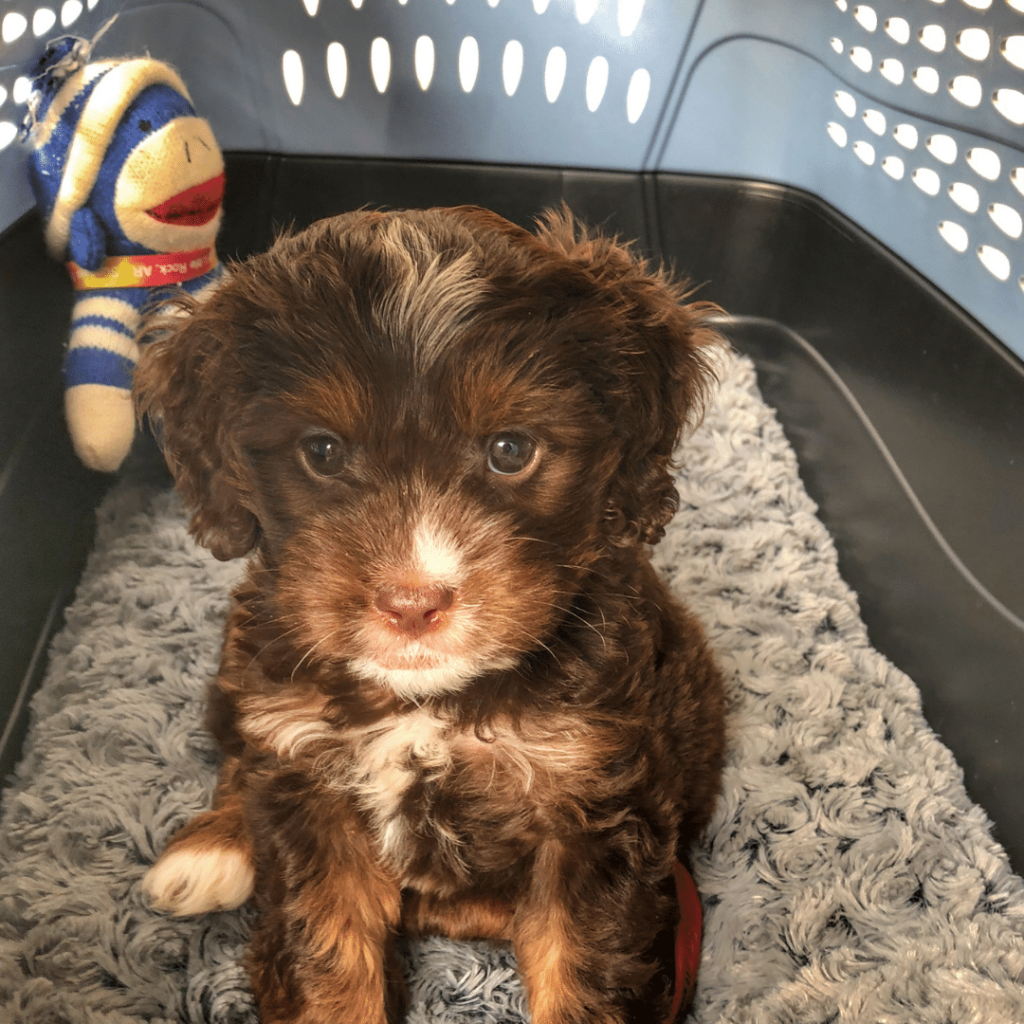 Pros and Cons Of Using a Crate for Puppy Training