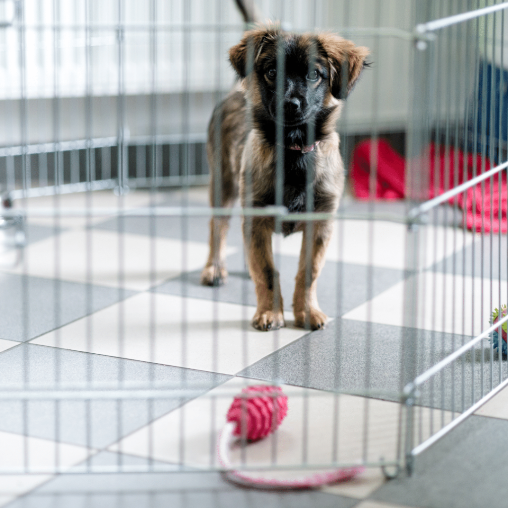 Pros and Cons of Using a Puppy Playpen for Training Your Puppy
