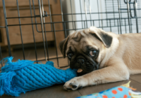 Puppy Pen vs Crate: Which One Do You Need?