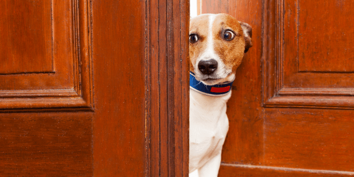 My Dog is Scared of Me: 10 Ways to Help