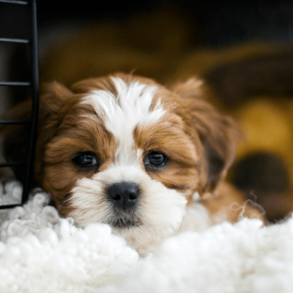 what should I avoid if my dog is scared of me
